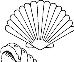 48 best dibujos marinos images on pinterest sailor - Coquille saint jacques dessin ...