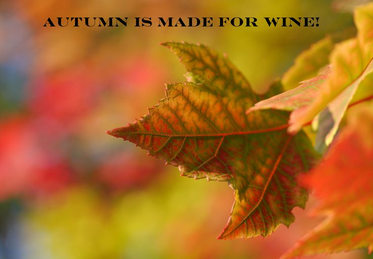 Fall Wine Events In Clinton County, Illinois