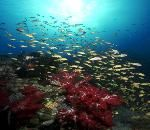 BUNAKEN - Sulawesi Utara  Tersedia 23 tempat snorkeling/penyelaman. di sana juga menyewakan alat-alat menyelam. Anda juga bisa melihat kurang lebih 200 jenis spesies ikan dan 390 spesies terumbu karang yang memancarkan pesona menakjubkan. Bentuknya berlekak-lekuk unik, celah-celah hingga gua atau terowongan mungil bawah laut yang mungkin mustahil ditemukan di tempat lain. Di bawah hamparan laut seluas 890,65 km2 di kawasan Teluk Manado.