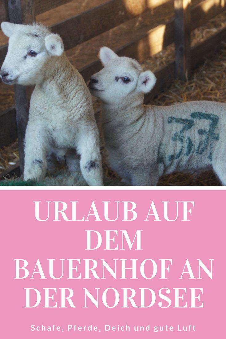 Urlaub auf dem Bauernhof in der Schäferei Rolfs in Büsum: Ein Reisetipp für den Urlaub an der Nordsee. Auch für Familien mit kleinen Kindern toll!