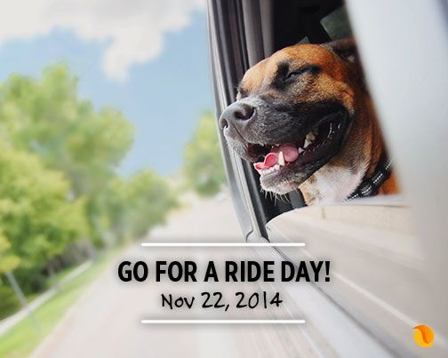 This will be your dog's favourite special day! #Cute #Dog #Dogs
