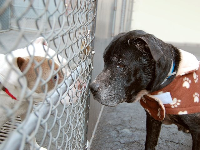 PLEASE: considering fostering and adopting dogs from high kill shelters like ACC of NYC. Where innocent dogs die. Please help us to continue save lives urgentpetsondeathrow.org