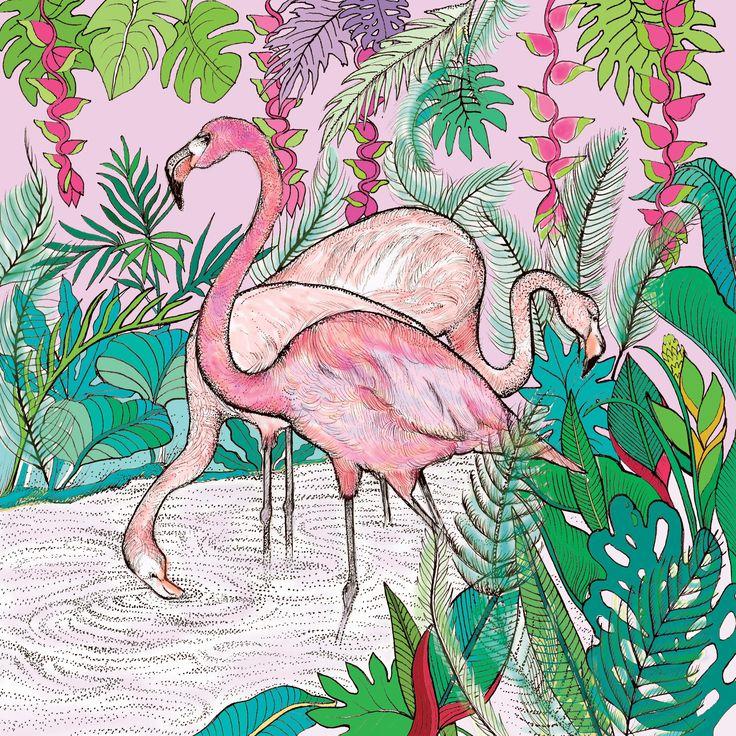 TW36 - Flamingos