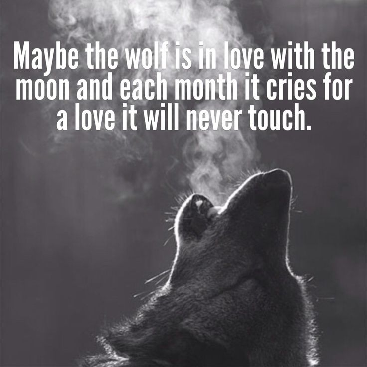 Love Quotes For Each Month Of The Year: Maybe The Wolf Is In Love With The Moon, And Each Month It