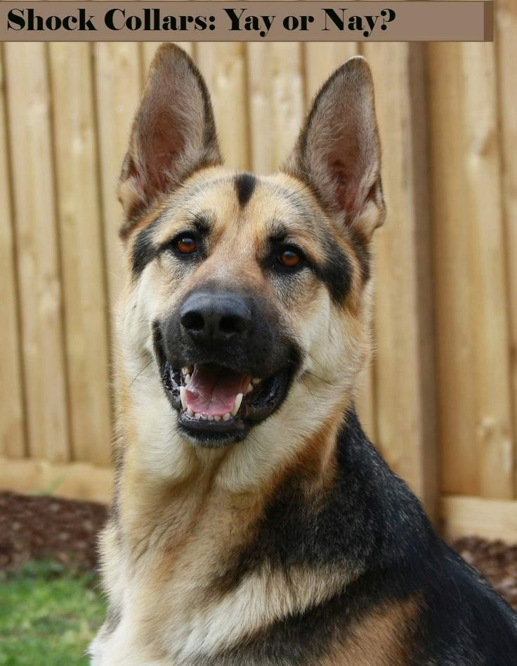 Dog Shock Collars: Yay or Nay? | http://DogVills.com