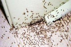Gondjaid vannak a hangyákkal? Ez a trükk örökre száműzi őket!