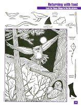 Zoekplaat uilen voor kleuters