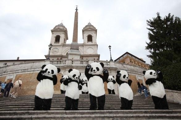 Panda Giganti manifestano a Roma - #Pambassador