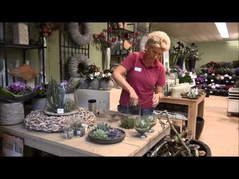 Leurs Tip van de week: Vetplantjes