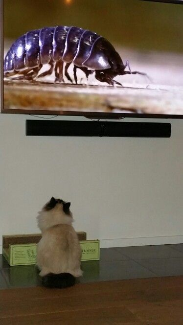 Watching Telly......