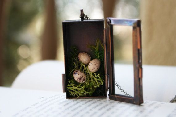 Bird Nest Shadowbox Necklace  Spotted Egg by apocketofwhimsy