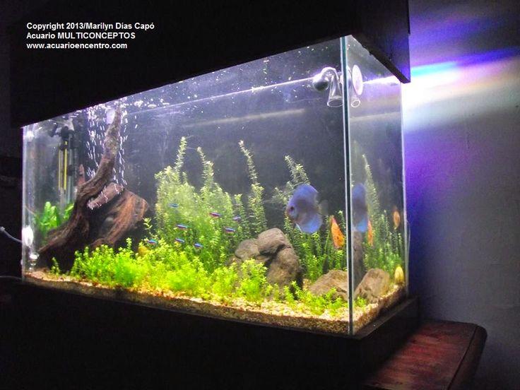 Las 25 mejores ideas sobre peces de agua dulce en for Lista de peces tropicales para acuarios