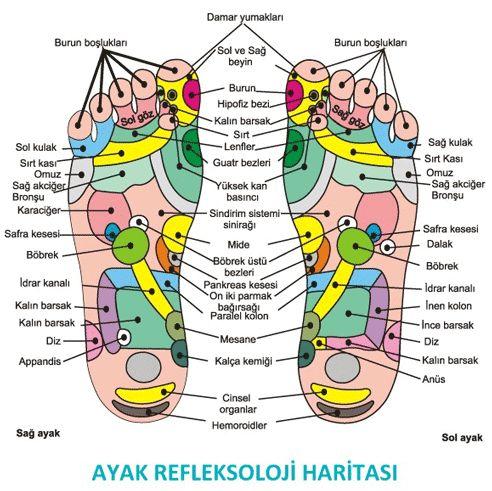 Ayak Haritası (Ayak refleksoloji) Ayaklar vücudun aynasıdır. Sağlıklı ayak, sağlıklı vücut demektir.  Haritada vücudumuzdaki her bölgenin ayak üzerindeki bağlantı noktaları gösterilmiştir.