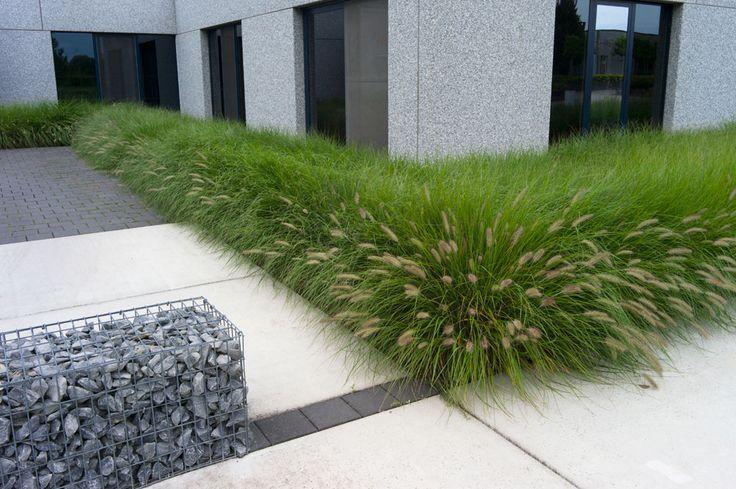 Border grassen rond kantoorgebouw - Houtmeyers Plantencentrum - Boomkwekerij
