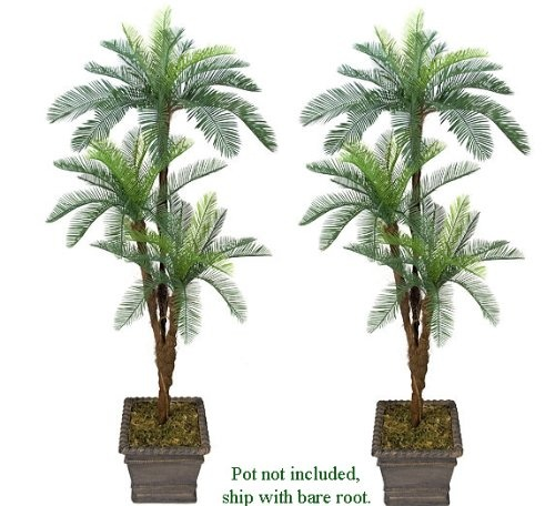entracing palm tree type house plant. TWO 6  Cycas Tripled Artificial Palm Tree Silk Plant plastic Fronds with No Pot 41 best Plants images on Pinterest plants