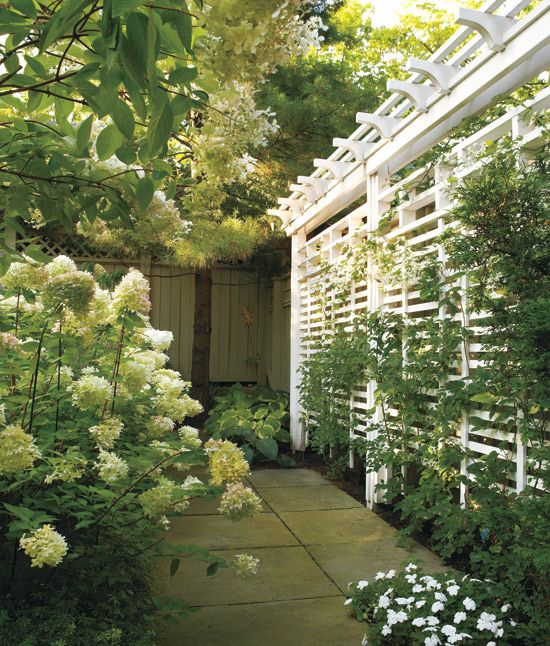 outdoor-living-room-trellis: White Gardens, White Trellis, Trellis Ideas, Gardens Trellis, Outdoor Living Rooms Trellis, Trellis Fence, White Hydrangeas, Outdoor Privacy Screens, Lattices Fence