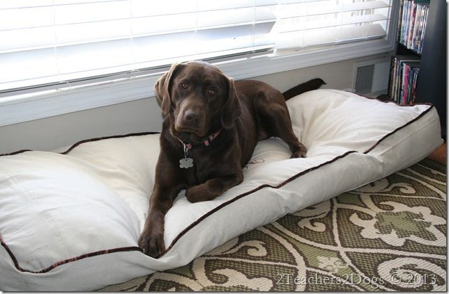 Super sized dog bed homemade awesome and pets for Homemade beds for dogs