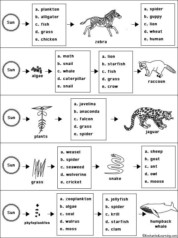 Food chains and food webs skills worksheet answers