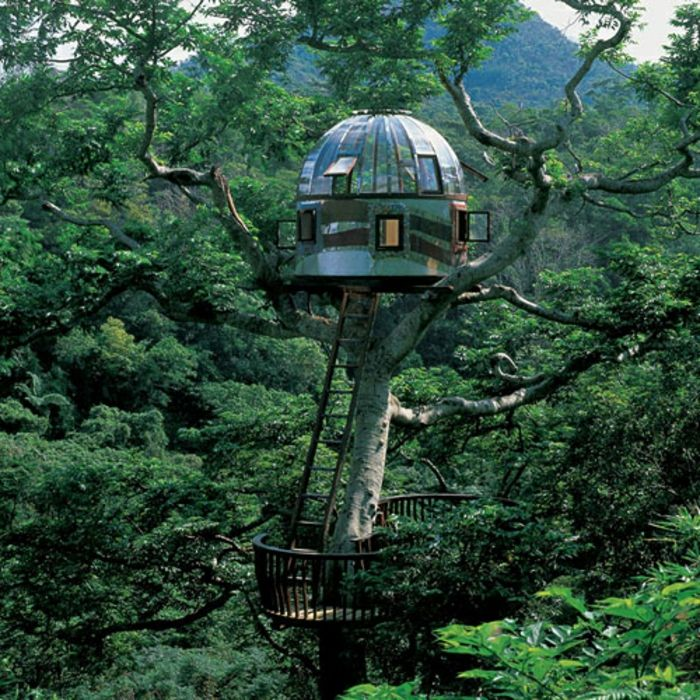 1036 best Love Treehouses They're Magic images on ...