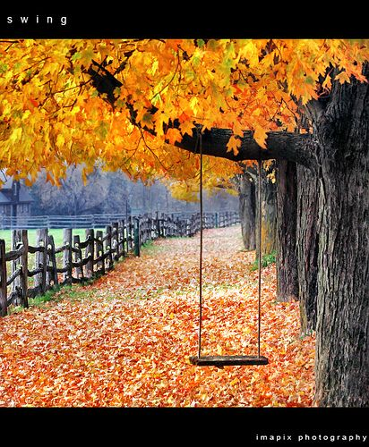 Autumn.: Fall Photography, Fall Pictures, Autumn Leaves, Color, Autumn Fall, Front Yard, Fall Halloween, Trees Swings, Fall Weather