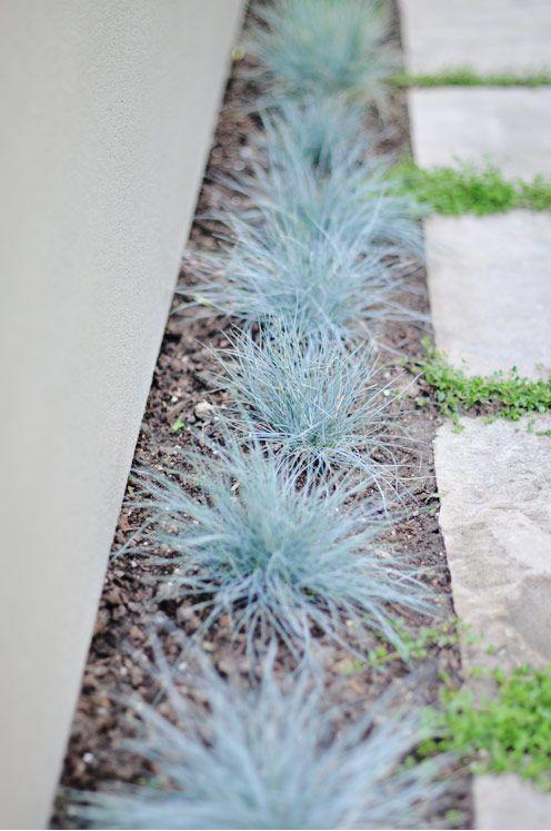 Festuca glauca 'Elijah Blue'  for the garden - photo and garden - Michelle Wentworth via Creature Comforts