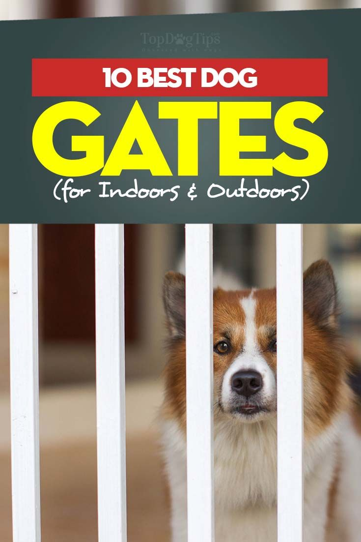 If you're in the market for the best dog gates indoor, whether for your pet's safety or simply to confine your dog so as not to allow him walk around the house, there are several aspects you'll need to consider to pick the right type of gates for dogs. #dogs #gates #petgates