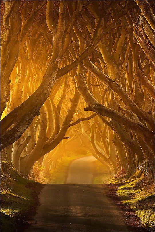 The Dark Hedges in Antrim, Ireland