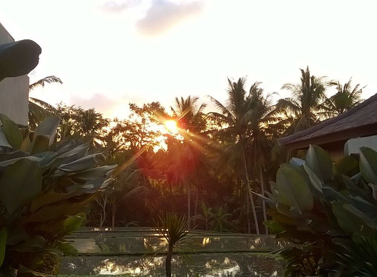 Today's sunset in Ubud!