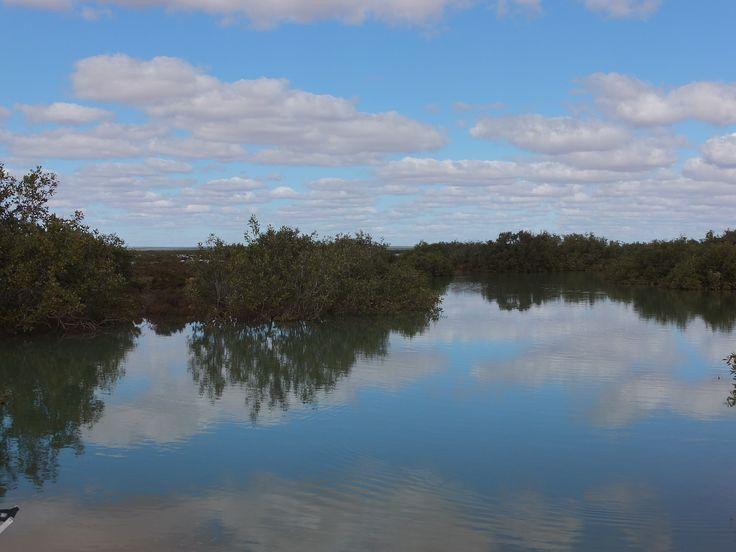 mangrove river. Bullara Stn WA