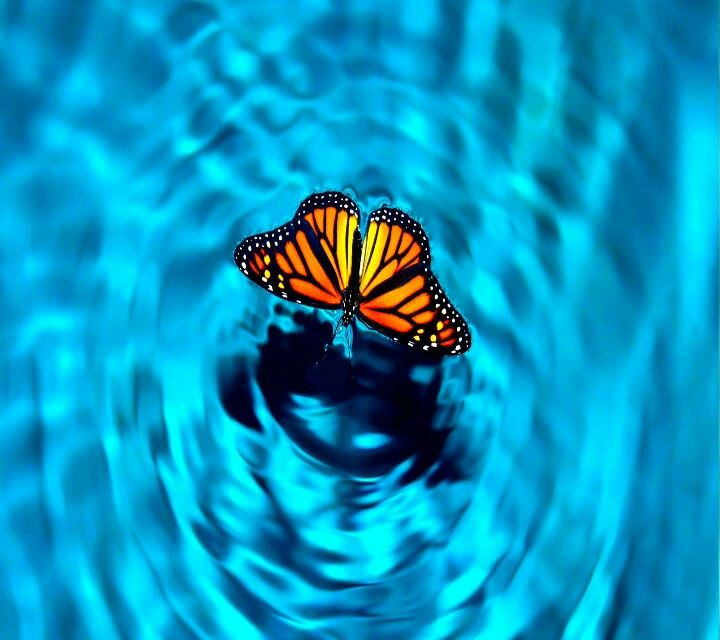 Water butterfly beauty