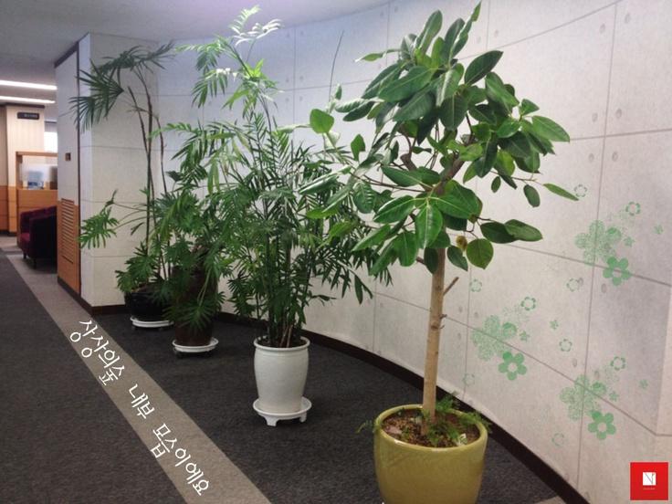 상상의숲은 자연 친화적인 환경을 만들기 위해 곳곳에 식물을 키우고 있어요^^  / Thursday, February 7th, 2013