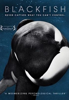 Killer whales are beloved, majestic, friendly giants, yet infamous for their capacity to kill viciously. Blackfish unravels the complexities of this dichotom...