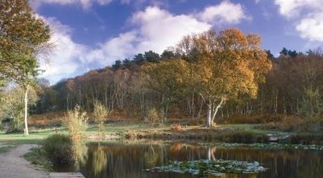 Kelling Heath, North Norfolk