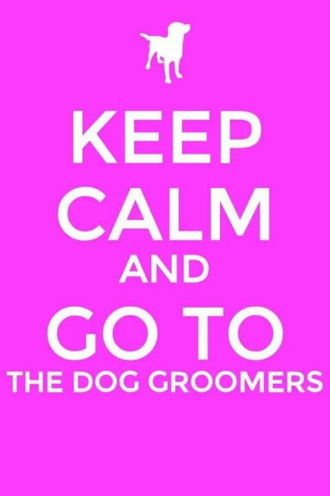 how to keep a dog calm while grooming