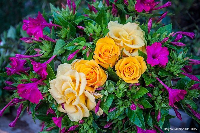 Night beauty, roses.