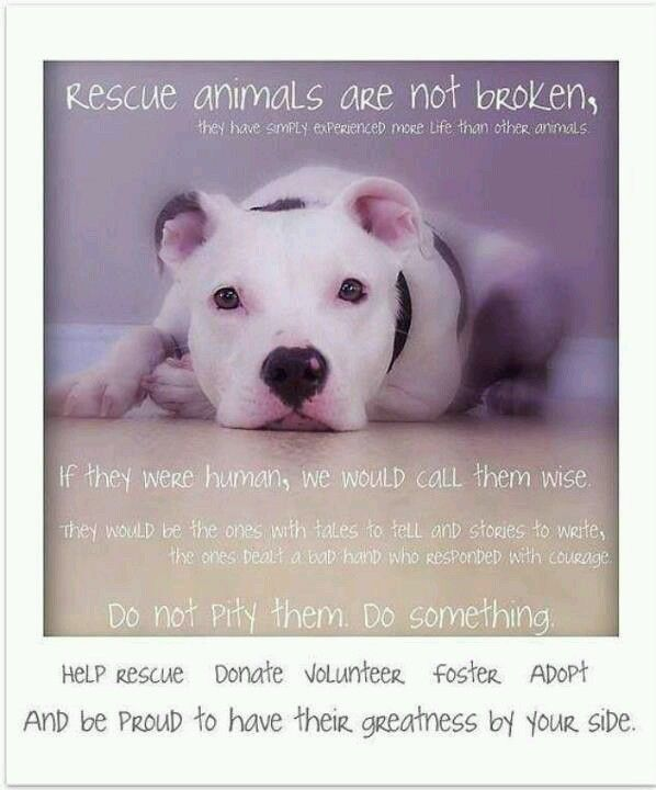 Rescue animals are not broken.
