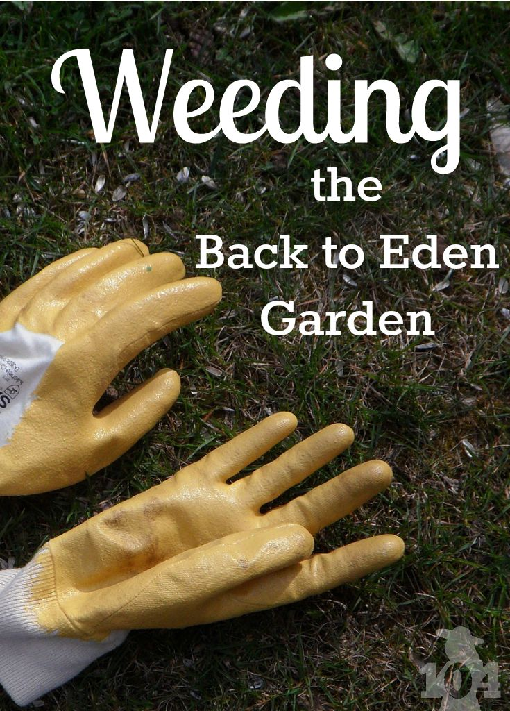 17 Best Images About Back To Eden Gardening With Paul On Pinterest Gardens Raised Beds And
