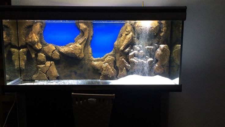 17 best images about aquarium on pinterest underwater for Google fish tank mrdoob