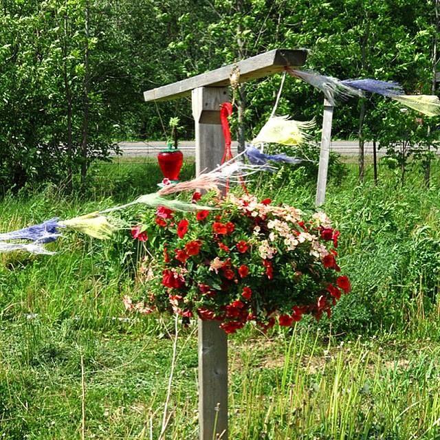 Beautiful Flowers & Hummingbird Food ...Please come visit us this summer Hummingbirds at Valhalla Montreal. #flowers #Hummingbird #Garden #gardening #greenliving #Ecodesign #sustainable  Website:www.montreal.valhallamovement.com/