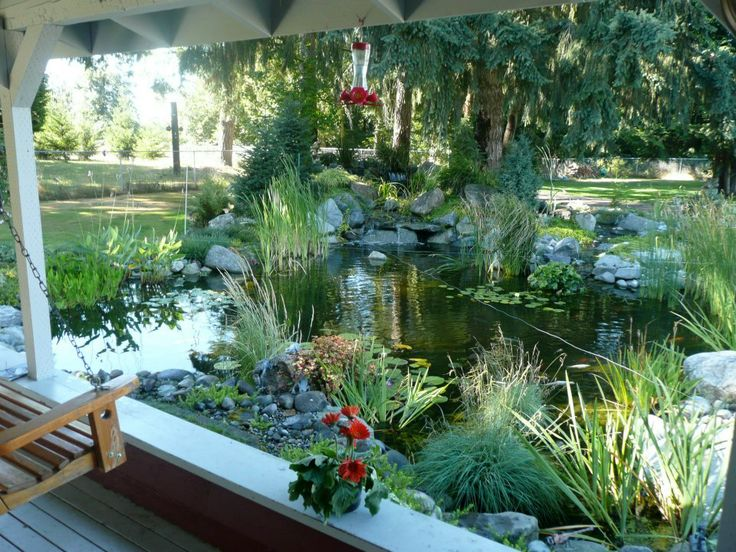 What a nice porch view #pond #fish #Tetrapond