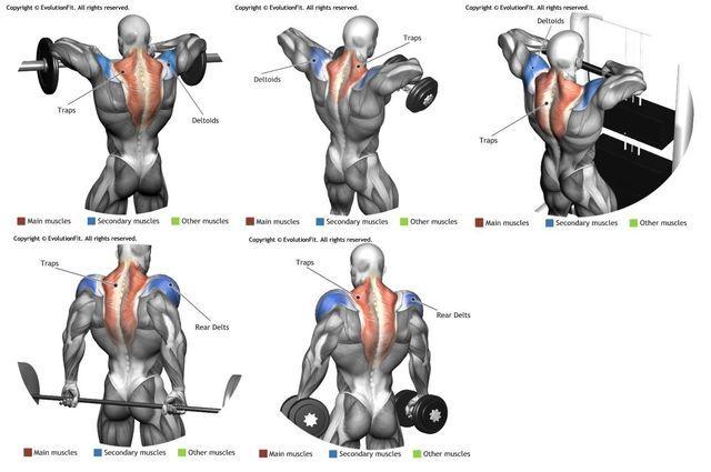 Trapezius training   Fitness, Exercises & Health   Traps ...