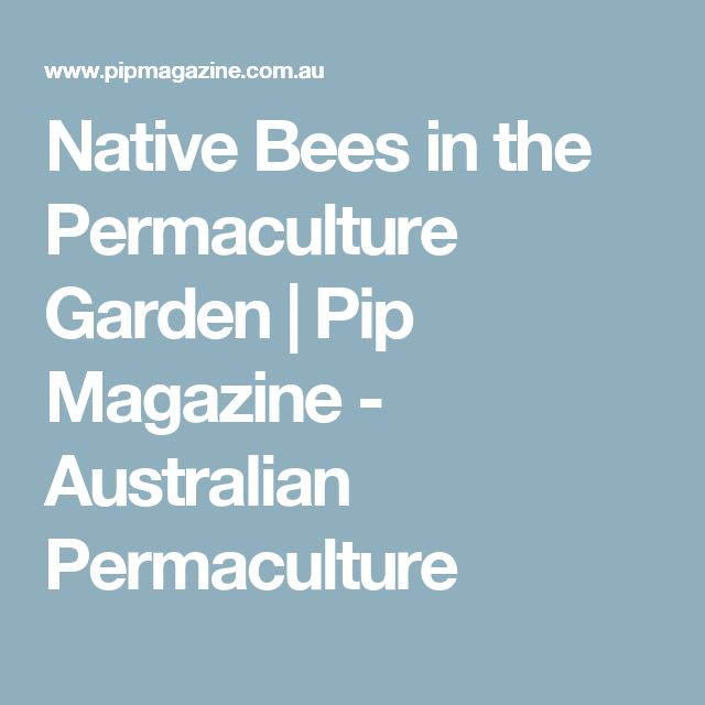 Native Bees in the Permaculture Garden | Pip Magazine - Australian Permaculture