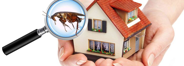 In this blog, we have discussed how a pest exterminator can help enhance your life as well as protect your property against any kind of damage.