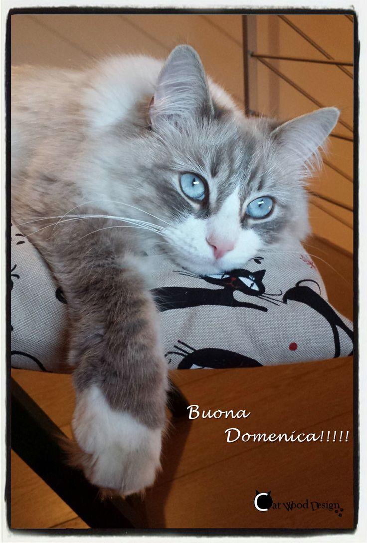 Buona #domenica a tutti!!! #gatti #cat
