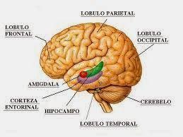 Educar es neuroeducación: Inteligencia emocional, aprender a aprender.