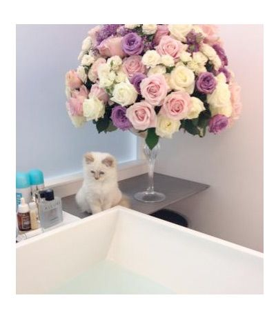 Choupette: Lagerfeld S Kitten, Cats, Karl Lagerfeld, Kittens, Flower, Animal