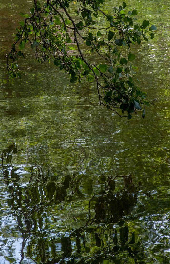 Reflection of Summer - Heijastuksia kesästä by Pauliina Kuikka