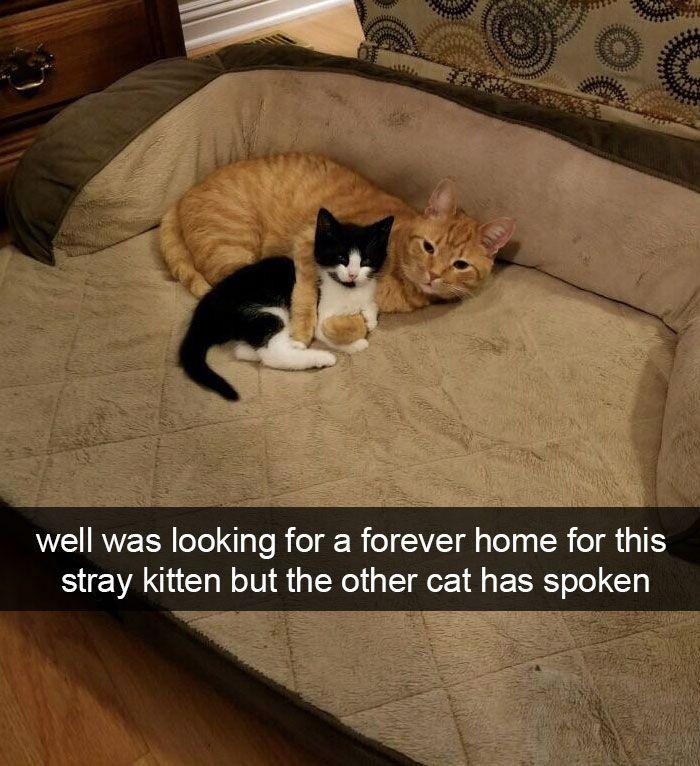 30+ lustige Katzen-Snapchats, die im-Paw-Sible sind, um nicht zu lachen (neue Bilder)
