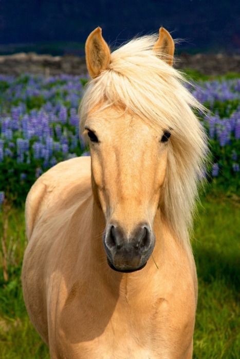 palomino colored horse...lovely with the flowers in the ...