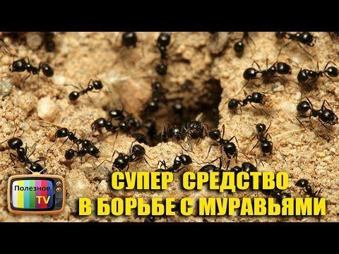 СУПЕР СРЕДСТВО В БОРЬБЕ С МУРАВЬЯМИ - YouTube